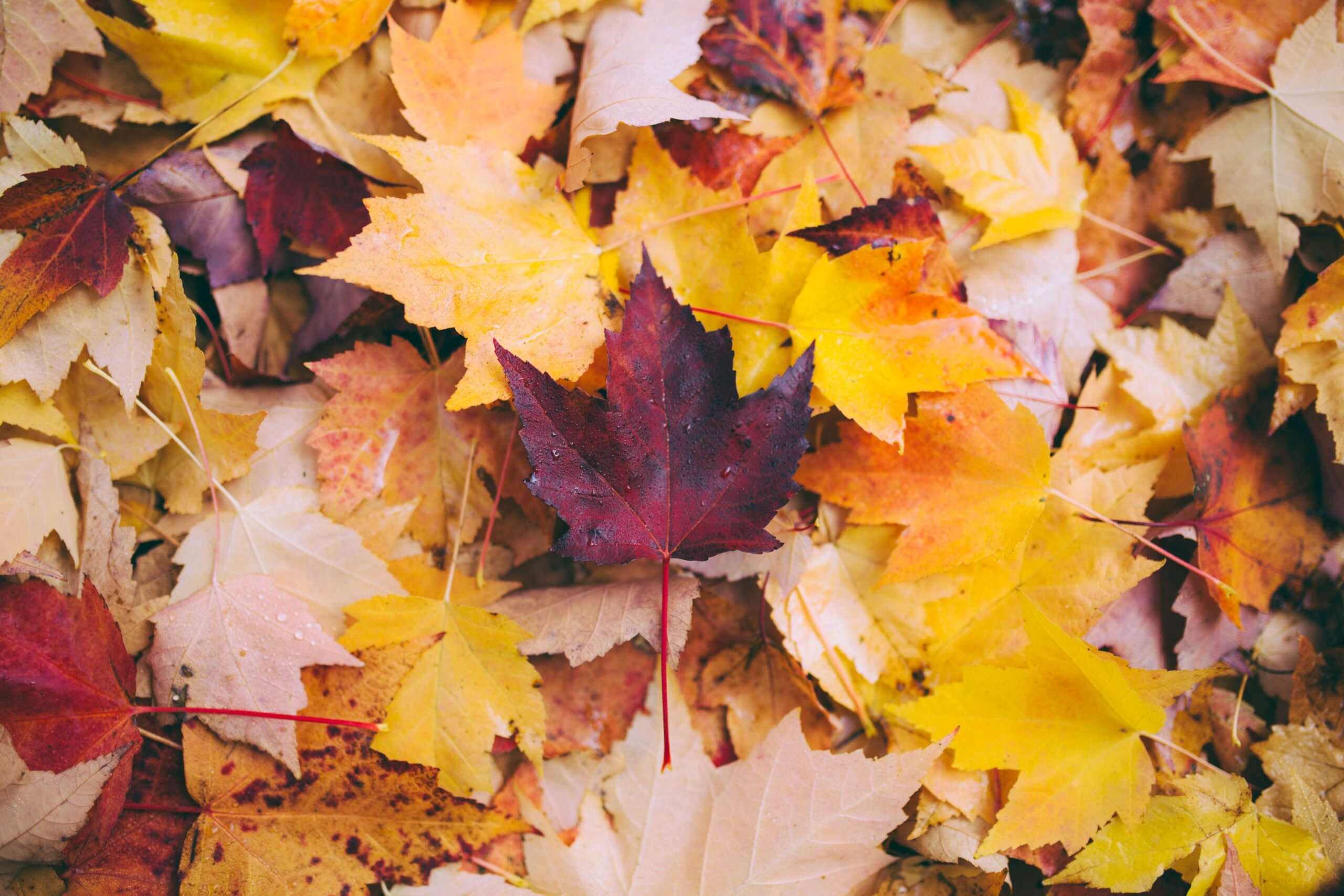 How To Boost My Year With Autumn Cheer